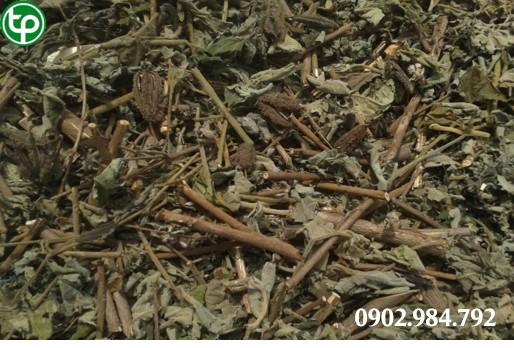Công ty chuyên cung cấp mua bán cây an xoa tại TPHCM
