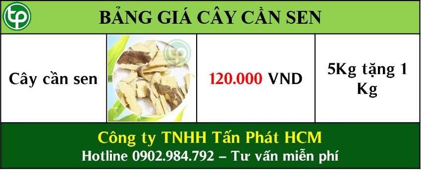 Bảng giá bán cây cần sen tại tphcm