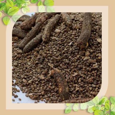 bán chuối hộ rừng tại tphcm tăng cường
