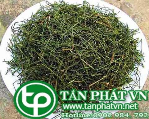 mua bán giảo cổ lam tại Ninh Thuận chất lượng