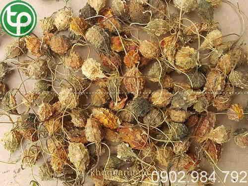 trái mướp đắng rừng tại Bình Thuận giá tốt