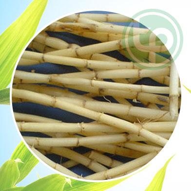Địa chỉ mua rễ cỏ tranh tại tphcm