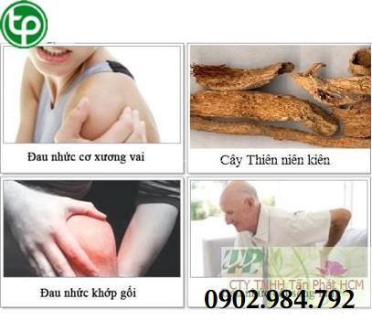phân phối Thiên niên kiện Hỗ trợ trị xương khớp Chất Lượng Toàn Quốc