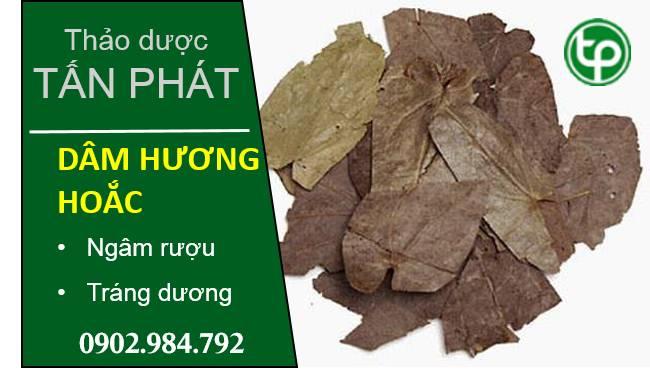 Hình ảnh thảo dược dâm dương hoắc khô của thảo dược Tấn Phát