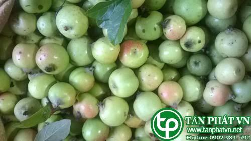 Cách nhận biết táo mè Việt Nam và Trung Quốc dễ nhất?