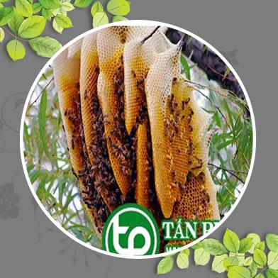 Hình ảnh mật ong rừng