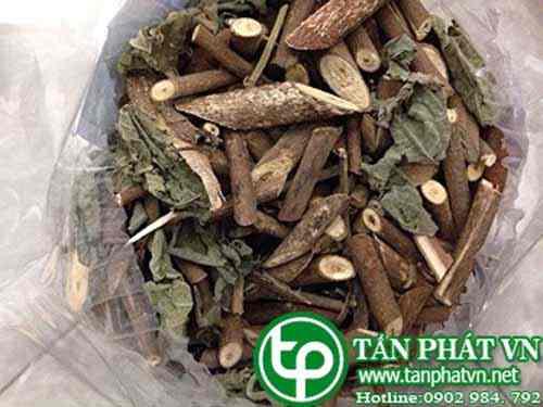 ở đâu mua bán cây an xoa tại Hưng Yên tăng cường