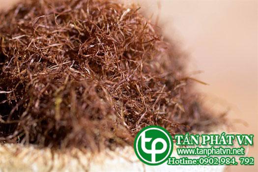 phân phối sỉ lẻ râu ngô chất lượng uy tín